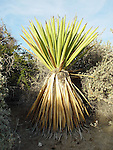 Flora and Fauna botanical photography Cactus, palm desert, green, yellow, red, yucca,