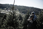 November 23, 2008. Ashe County, NC.. The Christmas tree industry in Ashe County.. At the Miller's Christmas Tree Farm, 360.982.3088, Highway 16 N.. C.T. Walker and his grandson, Chase Wilkerson, age 2, look for a tree for the family living room.. All the land for the farm used to be for cattle, but due to the difficulty of independent ranching, the farm was turned over to trees years ago.