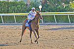 13 February 2010:  Dr. Zic in the Hurricane Bertie Stakes at Gulfstream Park in Hallandale Beach, FL.