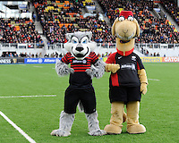 20130303 Copyright onEdition 2013©.Free for editorial use image, please credit: onEdition..The Saracens mascots - Wolfgang and Sarrie the camel  - during the Premiership Rugby match between Saracens and London Welsh at Allianz Park on Sunday 3rd March 2013 (Photo by Rob Munro)..For press contacts contact: Sam Feasey at brandRapport on M: +44 (0)7717 757114 E: SFeasey@brand-rapport.com..If you require a higher resolution image or you have any other onEdition photographic enquiries, please contact onEdition on 0845 900 2 900 or email info@onEdition.com.This image is copyright onEdition 2013©..This image has been supplied by onEdition and must be credited onEdition. The author is asserting his full Moral rights in relation to the publication of this image. Rights for onward transmission of any image or file is not granted or implied. Changing or deleting Copyright information is illegal as specified in the Copyright, Design and Patents Act 1988. If you are in any way unsure of your right to publish this image please contact onEdition on 0845 900 2 900 or email info@onEdition.com