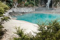 Oyster Pool in Wai-O-Tapu Thermal Wonderland, Rotorua Region, Central Plateau, North Island, New Zealand, NZ