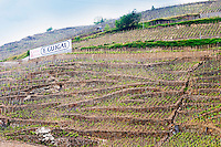Terraced vineyards in the Cote Rotie district around Ampuis in northern Rhone planted with the Syrah grape. A sign saying Cote Rotie E Guigal, one of the biggest wine producers in the region.  Ampuis, Cote Rotie, Rhone, France, Europe