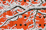 Kōyasan Shingon Temple, Mount Kōya, Wakayama Prefecture, Japan<br /> <br /> Snow covered branches in front of a brightly colored wall create a peaceful scene at the Koyasan Shingon Temples, Japan.