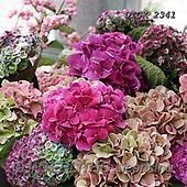 Gisela, FLOWERS, BLUMEN, FLORES, photos+++++,DTGK2341,#F#, EVERYDAY