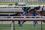 OCT 26 2014:Rusty Slipper, trained by Graham Motion, exercises in preparation for the Breeders' Cup Filly and Mare Turf at Santa Anita Race Course in Arcadia, California on October 26, 2014. Kazushi Ishida/ESW/CSM