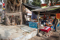 India, Dehradun.  String is often tied around a banyan tree, in the hope of good fortune.  This stand sells marigold garlands, water, coconuts, and other items to be used as offerings from visitors to the Tapkeshwar Hindu Temple.