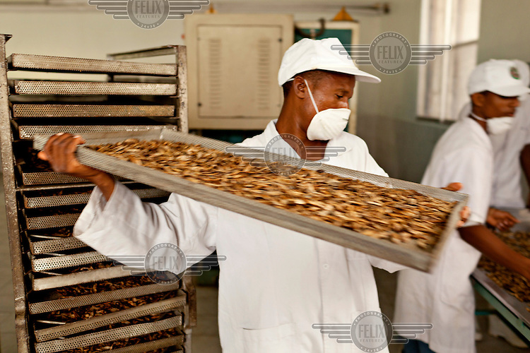 Staff at the Kenya Dried Foods Company prepare to heat to 90 centigrade trays of small dried fish caught in Lake Victoria and destined for pet food in Europe.