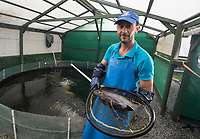 BNPS.co.uk (01202) 558833<br /> Pic: BNPS<br /> <br /> Pictured: Antonio Palladino farms organically-fed rainbow trout and uses their waste to grow about 50 different fruits and vegetables<br /> <br /> Something fishy or food for thought?<br /> <br /> A chef turned farmer is leading the way in sustainable farming by using fish poo as fertiliser.<br /> <br /> Antonio Palladino farms organically-fed rainbow trout and uses their waste to grow about 50 different fruits and vegetables without the need for soil.<br /> <br /> He says using fish waste as fertiliser is the most sustainable farming method and produces a bigger and much tastier crop.