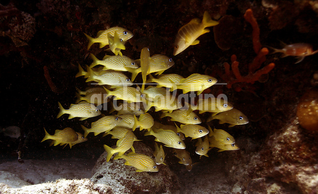 A shoal of yellow fishes are seen near the coast of Playa del Carmen, Yucatan, Mexico on October 12, 2006..Born in Argentina, photographer Ivan Pisarenko in 2005  decided to ride his motorcycle across the American continent. While traveling Ivan is gathering an exceptional photographic document on the more diverse corners of the region. Archivolatino will publish several stories by this talented young photographer..Closer look at  Ivan's page www.americaendosruedas.com...