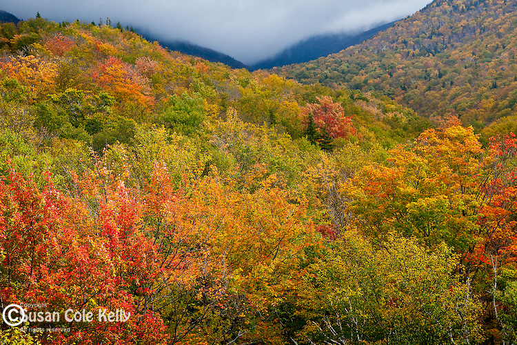 Fall foliage on Mt Lafayette in the White Mountain National Forest, NH, USA