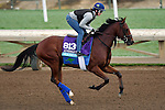 ARCADIA, CA - NOV 01: Oscar Performance, owned by American Racing, LLC and trained by Brian A. Lynch, exercises in preparation for the Breeders' Cup Juvenile Turf at Santa Anita Park on November 1, 2016 in Arcadia, California. (Photo by Scott Serio/Eclipse Sportswire/Breeders Cup)