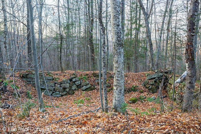 An abandoned cellar hole along an old road in Benton, New Hampshire. This road is located off the North and South Road (now Long Pond Road). And based on an 1860 historical map of Grafton County this is believed to have been the homesite of Gilbert P. Wright.