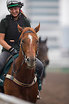 APR 25,2015:Criterion,trained by David Hayes,prepares for the Audemars Piguet Queen Elizabeth 2nd Cup at Sha Tin in New Territories,Hong Kong. Kazushi Ishida/ESW/CSM