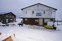 Mitch Seavey @ Kaltag Chkpt Kaltag AK 2005 Iditarod