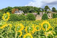 France,  Indre-et-Loire (37), Chançay, jardins du château de Valmer, champ de tournesols dans le verger