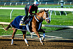 November 3, 2020: Point Of Honor, trained by trainer George Weaver, exercises in preparation for the Breeders' Cup Distaff at Keeneland Racetrack in Lexington, Kentucky on November 3, 2020. Jon Durr/Eclipse Sportswire/Breeders Cup