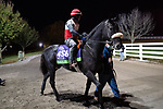 November 5, 2020: Ivar, trained by trainer Paulo H. Lobo, walks to the track exercise in preparation for the Breeders' Cup Mile at Keeneland Racetrack in Lexington, Kentucky on November 5, 2020. Scott Serio/Eclipse Sportswire/Breeders Cup/CSM