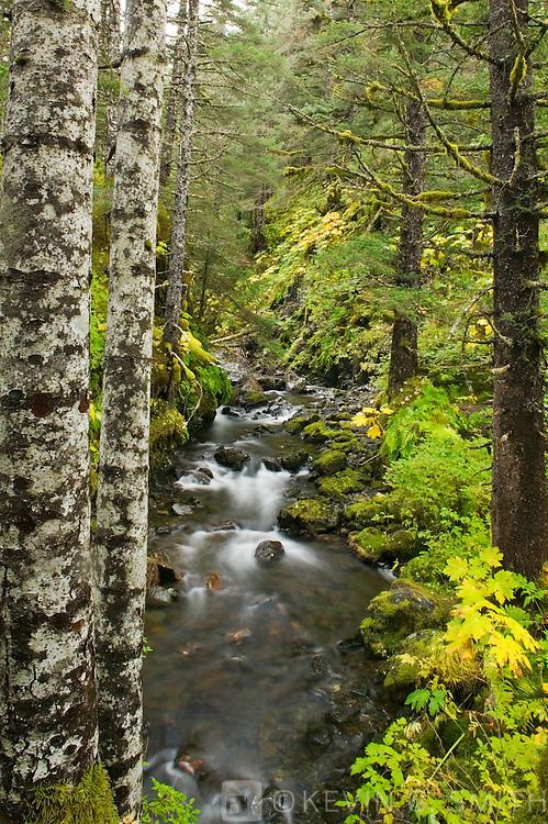 Rain forest and stream, Anton Lasen Bay, Kodiak Island, Alaska,