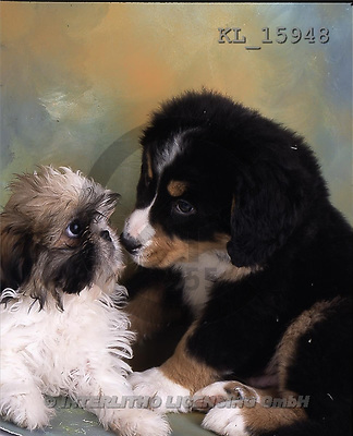 Interlitho, Alberto, ANIMALS, dogs, photos, 2 dogs(KL15948,#A#) Hunde, perros
