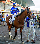 OZONE PARK, NY - NOVEMBER 26, 2016: Newman #2 in the paddock for the Grade 2 Remsen Stakes for 2-year olds, at Aqueduct Racetrack . (Photo by Sue Kawczynski/Eclipse Sportswire/Getty Images)