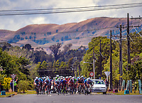 The peloton races down the finish straight on Camridge Street in Martinborough in stage four of the NZ Cycle Classic UCI Oceania Tour in Wairarapa, New Zealand on Wednesday, 25 January 2017. Photo: Dave Lintott / lintottphoto.co.nz