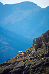 Mountain Goats on rocky cliffs in Glacier National Park in Montana