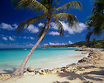 Antigua, West Indies  <br /> Palm tree framing the view of Dickinson Bay and distant Weatherills Point