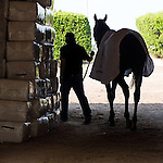 HALLANDALE BEACH, FL - JANUARY 27: Arrogate being cooled out by assistant trainer Jimmie Barnes at Gulfstream Park. (Photo by Arron Haggart/Eclipse Sportswire/Getty Images