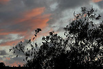 Evening Clouds 6