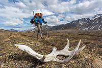 Moose antler on the tundra. Arctic National Wildlife Refuge, Brooks Range, Arctic Alaska.