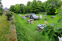 France, in Bretagne, the apiary of Loic Leray, a professional beekeeper.///France, en Bretagne, le rucher de Loïc Leray un apiculteur professionnel.