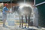 15 May 2010: Daylight Fire after winning the Malvern Hill hurdle at Strawberry Hill Races in New Kent, Va. Daylight Fire is owned by Falcon Racing and trained by Donald Yovanovich