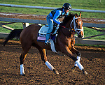 October 27, 2014:  Angela Renee, trained by Todd Pletcher, exercises in preparation for the 14 Hands Winery Breeders' Cup Juvenile Fillies at Santa Anita Race Course in Arcadia, California on October 27, 2014. Scott Serio/ESW/CSM