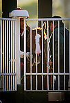 May 01, 2014: California Chrome schools in the starting gate as he prepares for the Kentucky Derby at Churchill Downs in Louisville Ky. Alex Evers/ESW/CSM