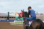DEL MAR, CA - NOVEMBER 02: Bullards Alley, owned by Wayne Spalding & Faron McCubbins and trained by Tim Glyshaw, exercises in preparation for Longines Breeders' Cup Turf at Del Mar Thoroughbred Club on November 2, 2017 in Del Mar, California. (Photo by Jamey Price/Eclipse Sportswire/Breeders Cup)