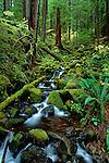 Small stream along Soleduck trail on the Olympic Penninsula Washington State USA.