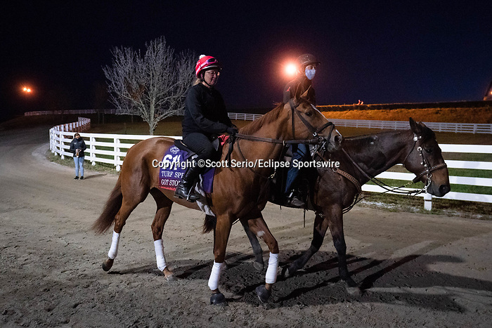 November 5, 2020: Got Stormy, trained by trainer Mark E. Casse, walks to the track to exercise in preparation for the Breeders' Cup Turf Sprint at Keeneland Racetrack in Lexington, Kentucky on November 5, 2020. Scott Serio/Eclipse Sportswire/Breeders Cup/CSM