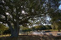 Not far from Cargèse on the land occupied by Mattei Jean-Nicolas' apiary near an olive grove.<br /> Près de Cargèse dans les terres le rucher de Mattei Jean-Nicolas près d'une oliveraie