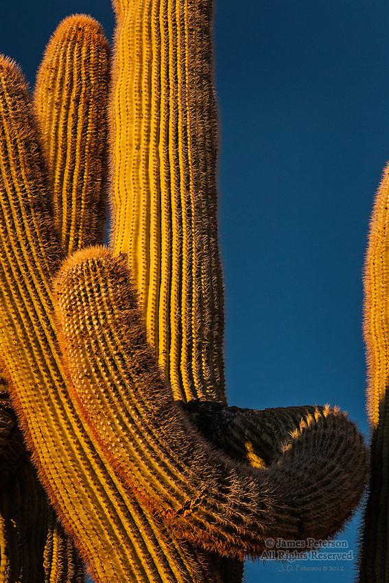 The Embrace #3, near Hualapai Mountains, Arizona