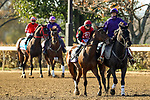 November 7, 2020 : Horses prepare for the Sprint on Breeders' Cup Championship Saturday at Keeneland Race Course in Lexington, Kentucky on November 7, 2020. Wendy Wooley/Breeders' Cup/Eclipse Sportswire/CSM