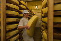 Europe/France/Franche-Comté/25/Doubs/Labergement-Sainte-Marie: Fruitière des Deux Lacs -  Affinage du Comté - le fromager retourne une meule // France, Doubs, Labergement Sainte Marie,  cheesemaking facility, or fruitière, the fruit cellar in county, returns a cheese wheel comte<br /> Auto N°: 2013-109