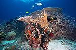 Coral reef, Triton Bay, Indonesia