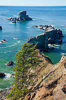 Ecola point above the rocky cliffs in Cannon Beach, OR out on the Oregon Coast.  The ocean calm with rock outcroppings in the water with a lone tree in the foreground.