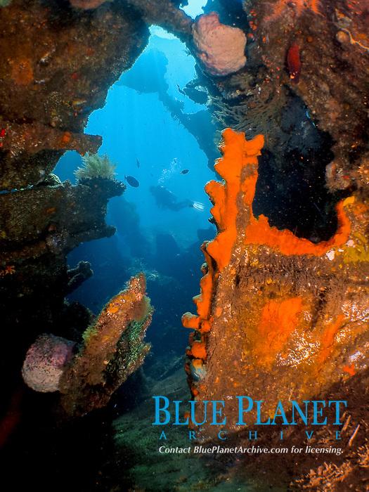 Seascape & Diver Liberty Wreck, Raja Ampat, Indonesia, Coral Reef