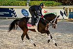 January 22, 2021: Aquaphobia exercises as horses prepare for the 2021 Pegasus World Cup Invitational at Gulfstream Park in Hallandale Beach, Florida. Scott Serio/Eclipse Sportswire/CSM