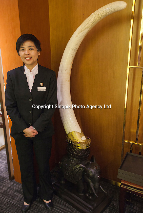 A salesperson stands next to one tusk from a pair of ivory tusks worth HK$8.2 million (GBP648,000.00) on sale in 'Chinese Arts & Crafts', Hong Kong, China, 29 November 2013. <br /> <br /> Photo by Alex Hofford / Sinopix