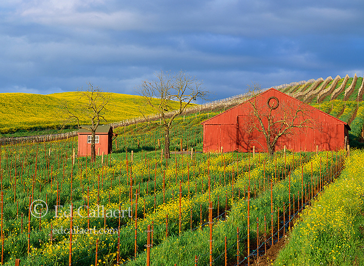 Red Barn, Carneros Appellation, Napa Valley, California