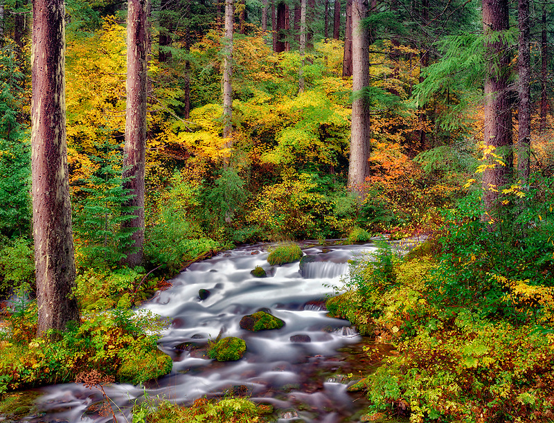 M00002L.tiff   Roaring River with fall colors. Taken from Auferdeide National scenic Byway, Oregon
