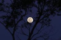 Campinas (SP), Clima-SP - Final de tarde com lua cheia em Campinas na noite desta terça-feira (01).