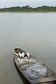 Xingu, Volta Grande, Pará State, Brazil. Aldeia Paquissamba (Juruna). Fish and fishing net in a dugout canoe.
